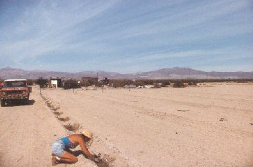 Planting our first jojoba 1985